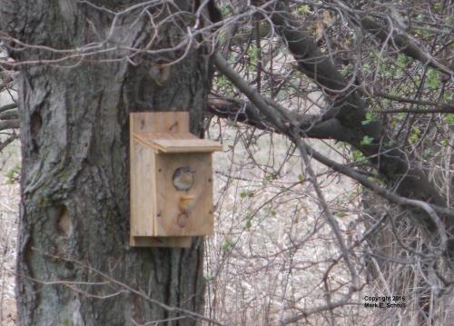 Blue Bird in box 1cr
